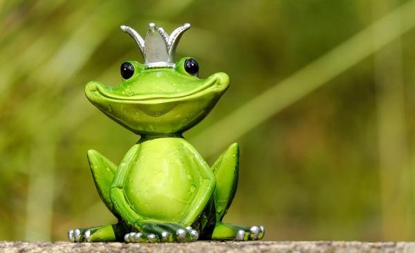 groene-koning-van-de-koers